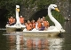 Swan Pedaloe Boats